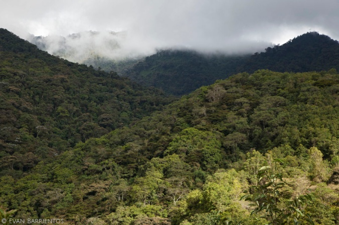 Tropical montane cloud forest, home of the Black-and-Chestnut Eagle.
