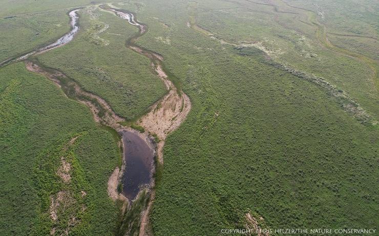 The prairie restoration in June, 2018.